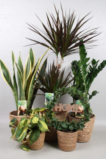 Plantenpakket (1)